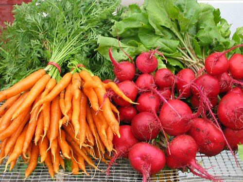 Вовремя убираем свеклу и морковь
