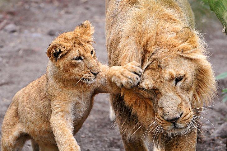 Милые детеныши животных