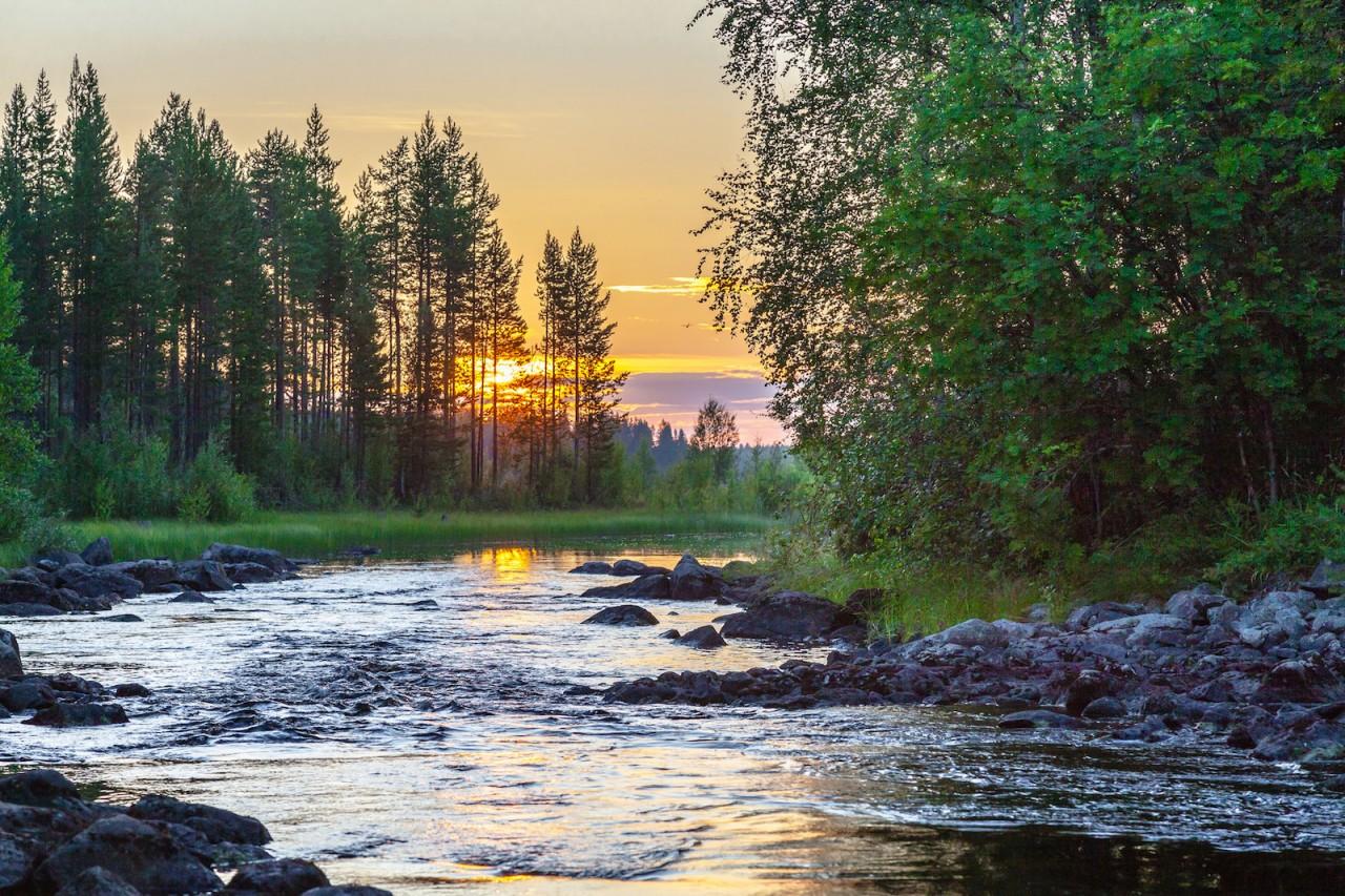 Лес на закате. карелия, природа, россия