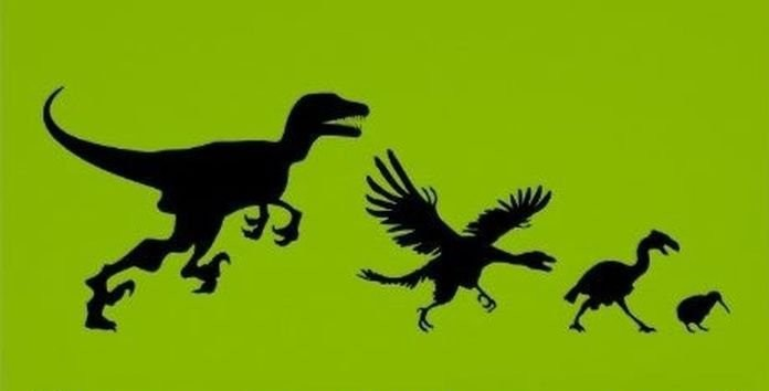 Иногда эволюция, это уныло. история, прикол, юмор