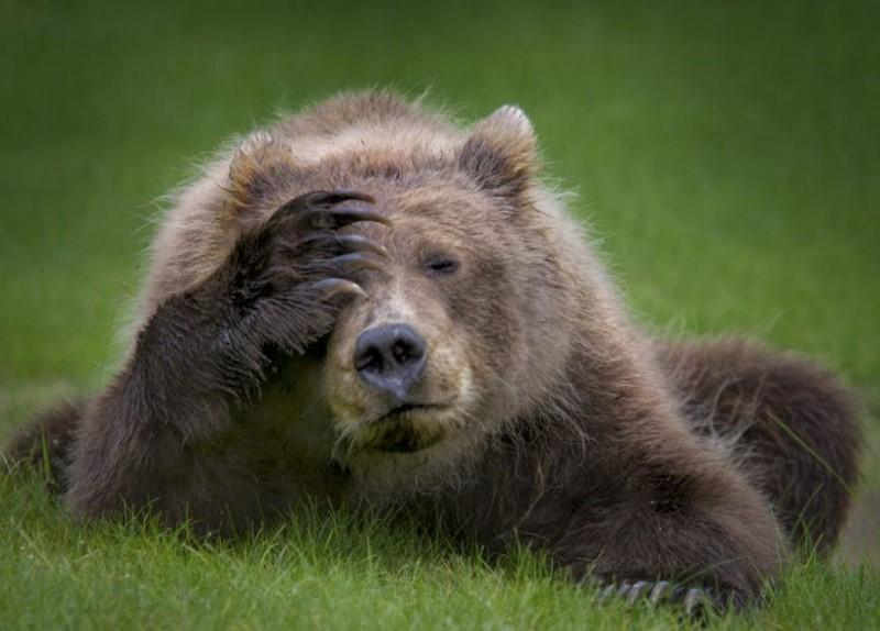 12 самых смешных фото животн…