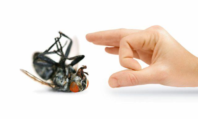 Если мухи атакуют: уникальный способ избавиться от назойливых насекомых