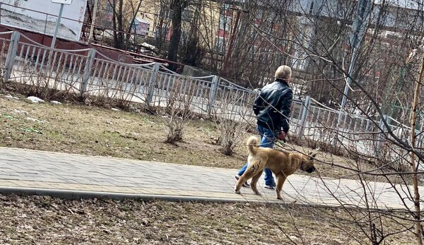 Конфликт собачников и мамочек на детских площадках