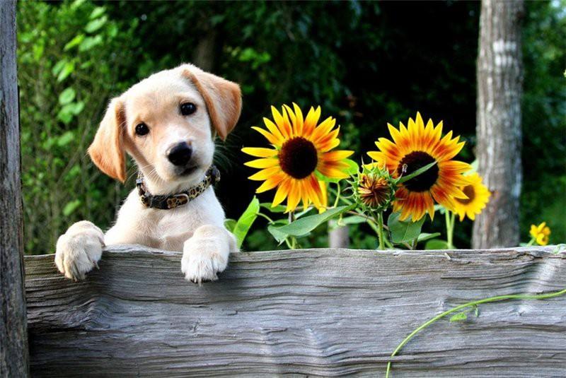 Почему собаки наклоняют голо…