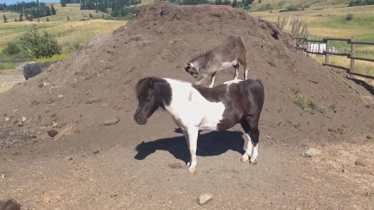 Угарные Кони Смешные Собаки и Кошки