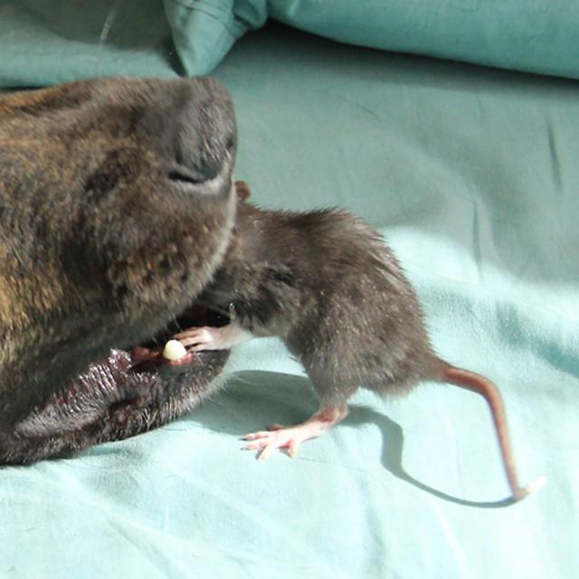 animal-friends-rat-dog-osiris-riff-20