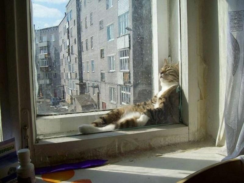 sleepingcats13 Коты, познавшие науку сна