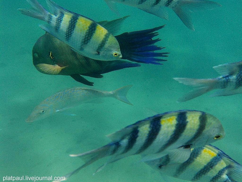 ЕГИПЕТ. Подводный мир Красного моря