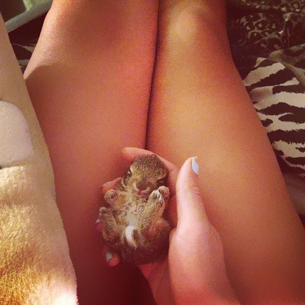10. Крольчонок детеныши, животные, милота