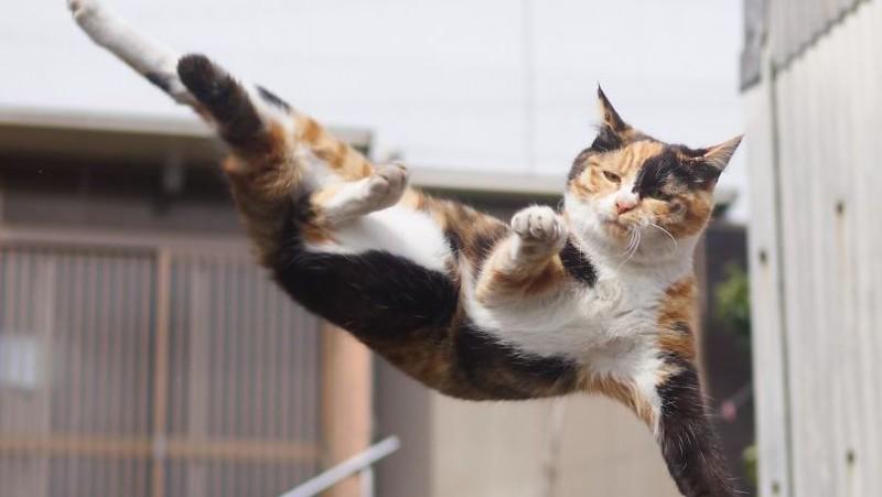 «Ниндзя-кот»: японец фотографирует животных во время их боевых практик