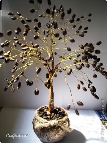 Необычное кофейное деревце. Небольшой мастер-класс