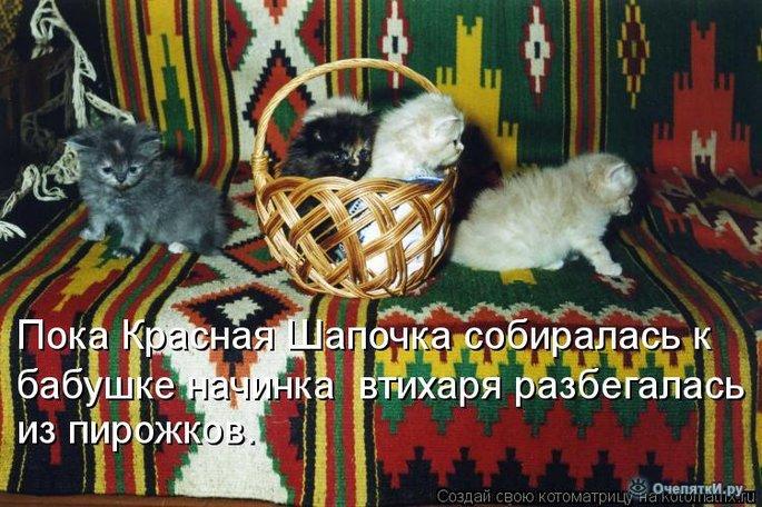 Юморная котоматрица 28