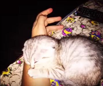 Этот котёнок ведёт себя так, что прохожие останавливаются