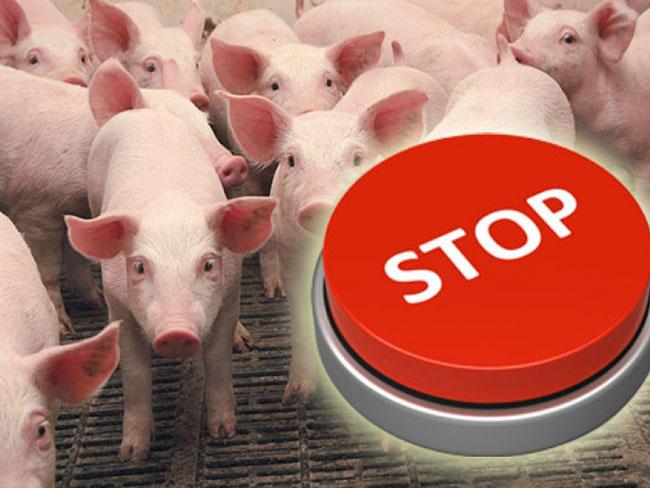 Не кнутом, так мясом. Украина снова запрещает импорт польской свинины