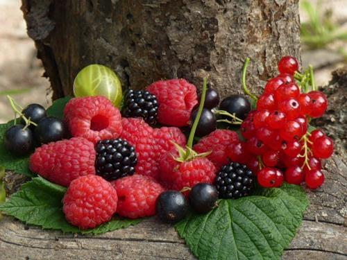 Весенние подкормки ягодников