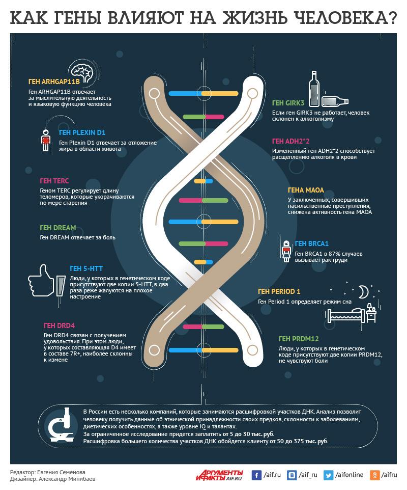 Как гены влияют на жизнь человека?
