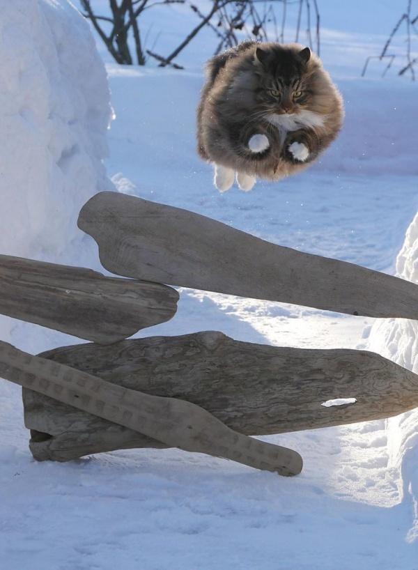 30 котиков, в существование …