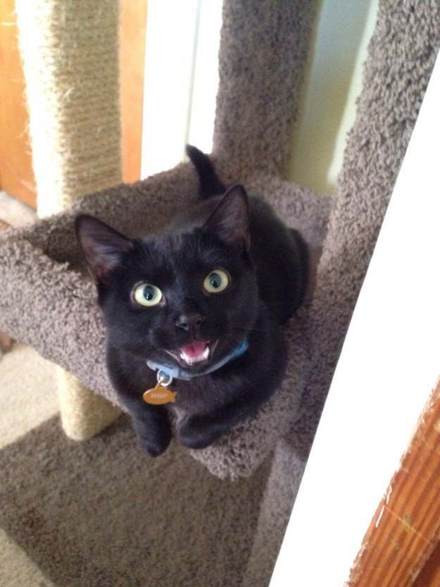 15. Гордый собой улыбчивый котик. животные, котята, милота