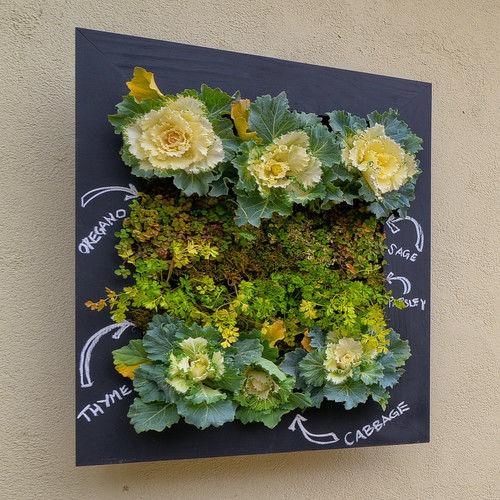 Настенный огород-панно. Фото с сайта http://www.houzz.com/