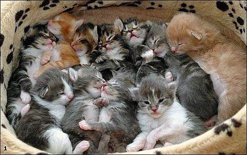...чтобы у всех котят были хозяева...