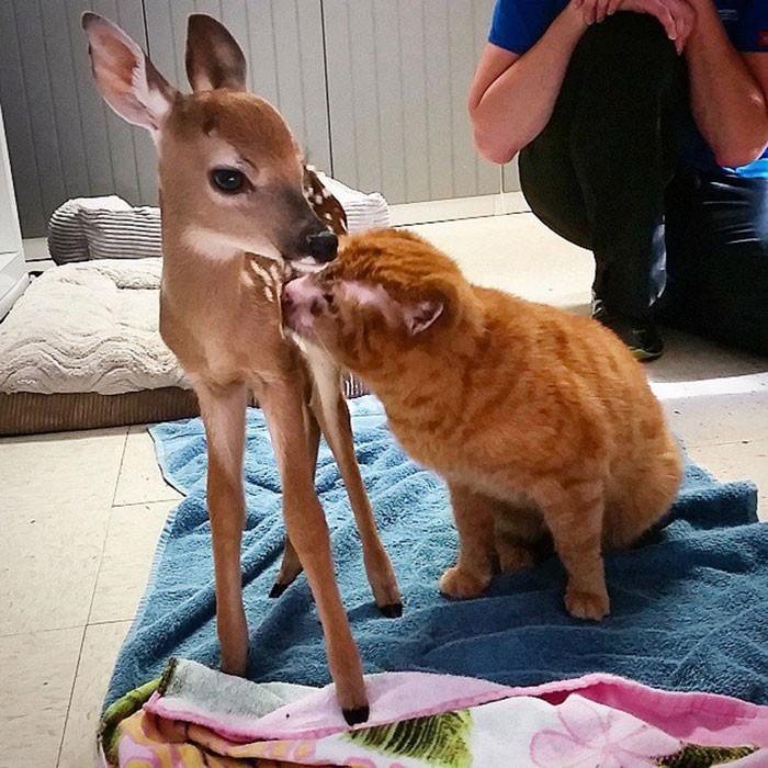 Спасенный кот заботится о животных животное, забота, кот, спасение