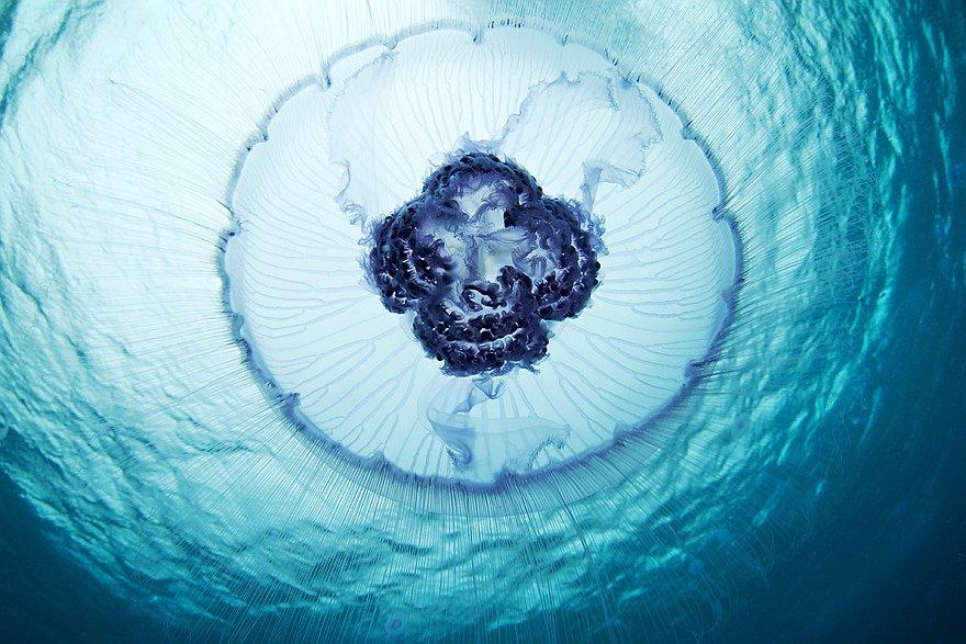 Купол медузы