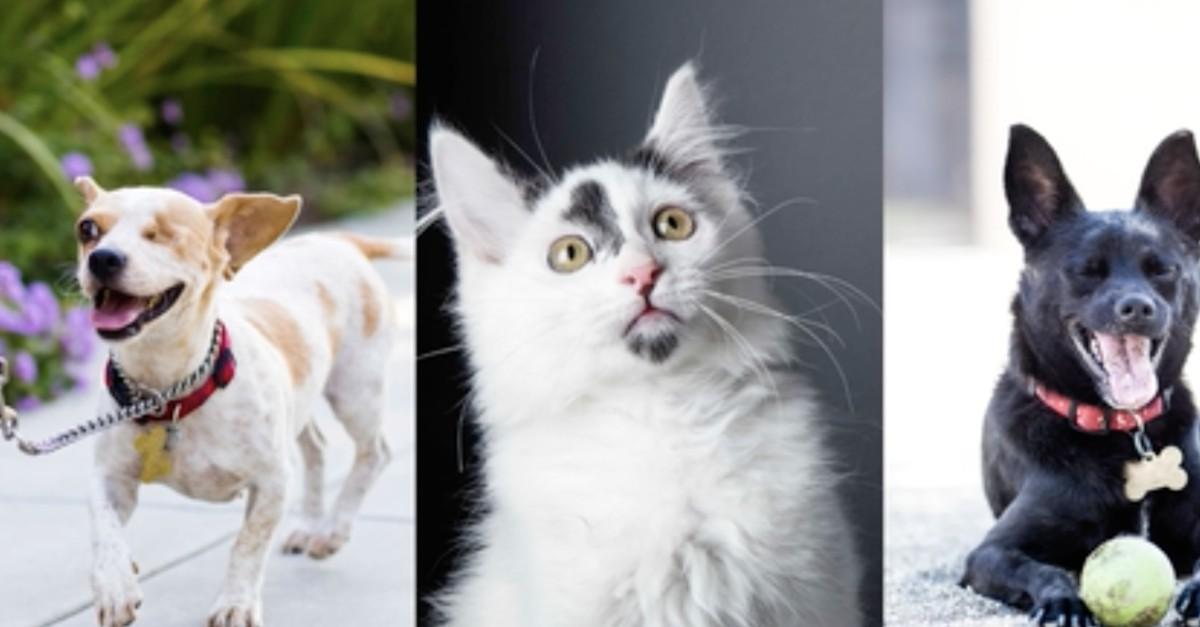 Getty Images запустили кампанию по сбору средств в пользу брошенных животных