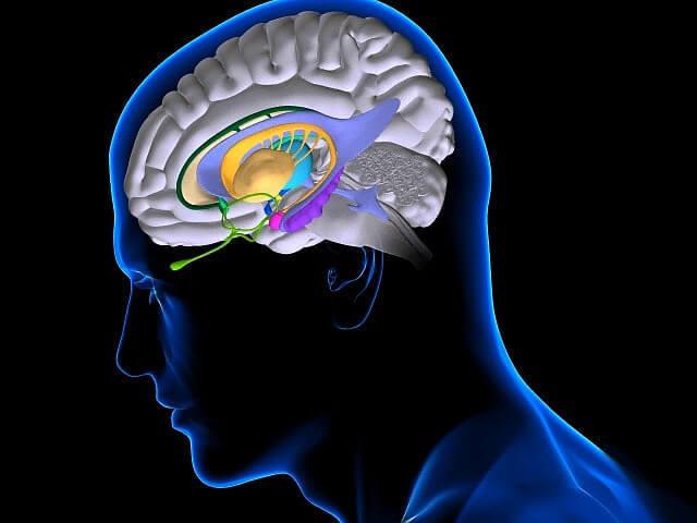 Продолжительный стресс стирает память