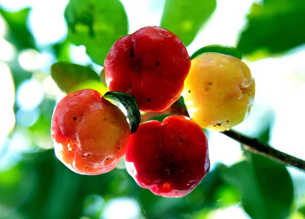 438 Экзотические фрукты