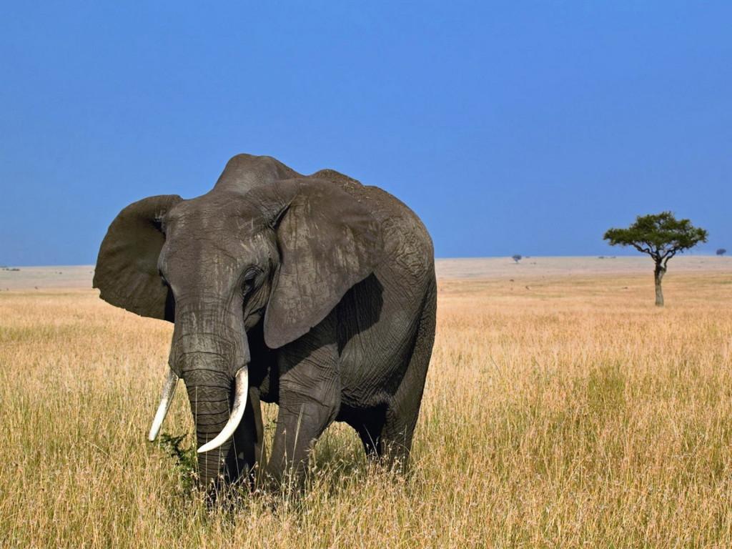 25 удивительных способностей животных животные, природа
