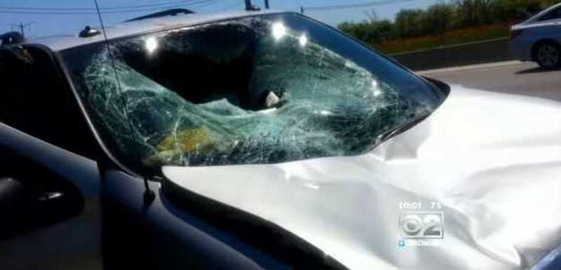 Упавший с неба олень пробил лобовое стекло автомобиля