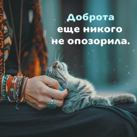 Кошки - лучшее средство от з…