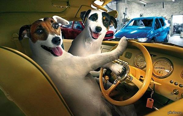 Смешные собаки. Топ-10