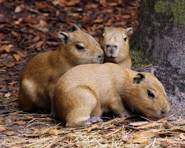 Трогательные фотографии детенышей животных для поднятия настроения и работоспособности