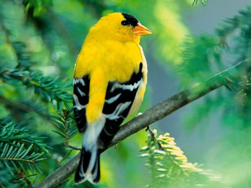 Самые редкие и красивые птицы в мире