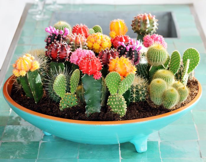 У бездушных и злых кактусы не цветут