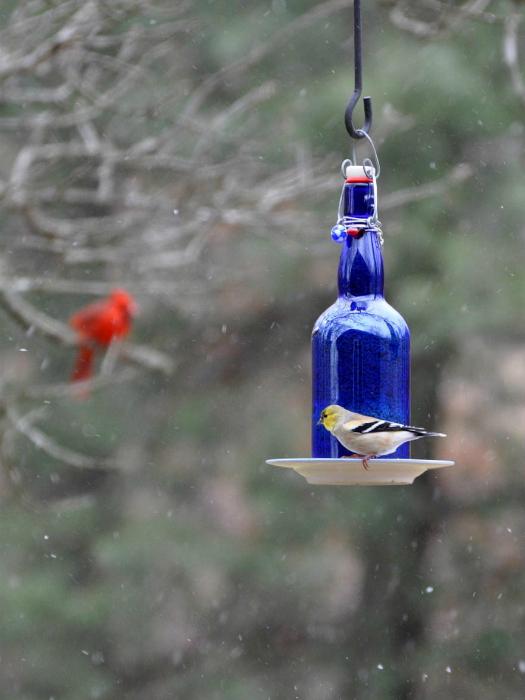 Идеи превращения винных бутылок в стильные и функциональные: Кормушка для птиц. Кормушка из верхней части винной бутылки, блюдца и железного крепления.