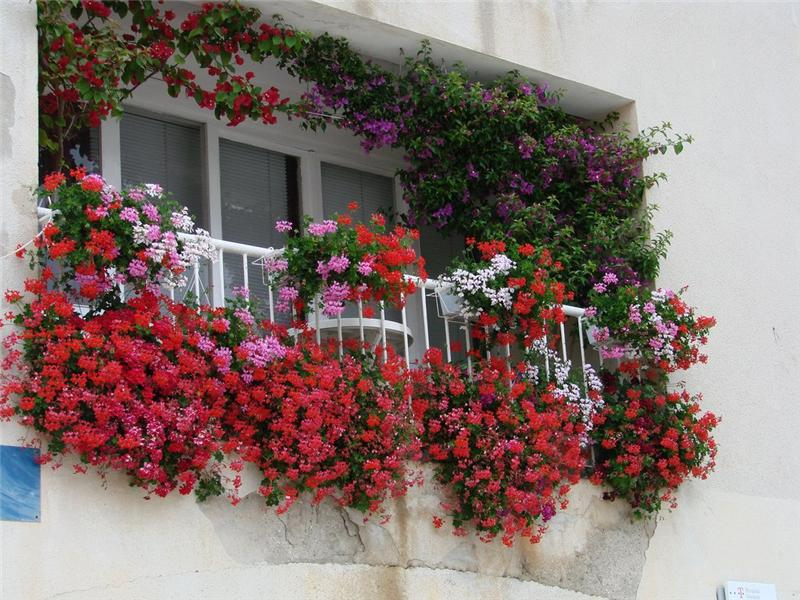 Красивый балкон цветы 97