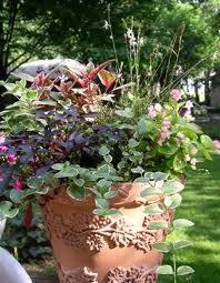 Озеленение дачного участка или балкона — контейнерное садоводство