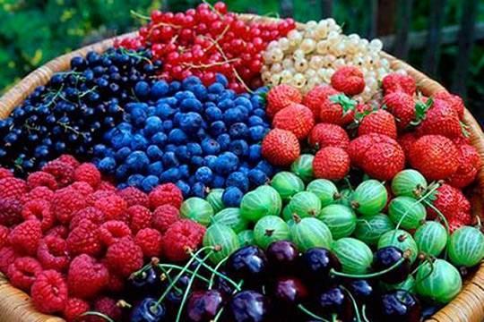 Стало известно какие ягоды самые полезные для сердца