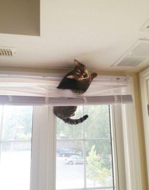 Забавные кошки, попавшие в л…