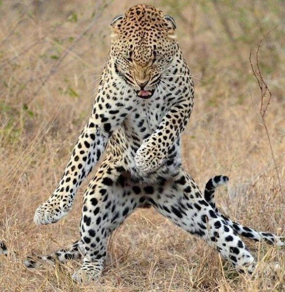 Танцуй пока молодой :))