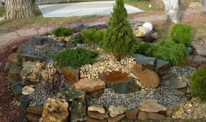 Ландшафтный дизайн - фото хвойных деревьев в альпинарии