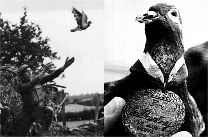 Шер Ами - почтовый голубь, который спас жизни 200 человек