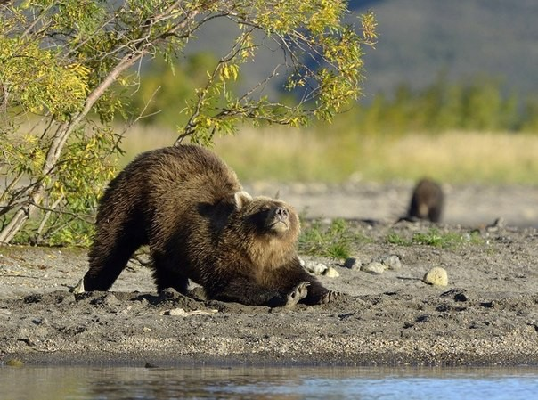 """Самое время для """"потягушек"""". Очень забавные фото животных!"""