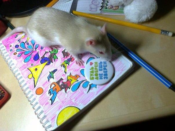 История спасения крысёнка по имени Марк