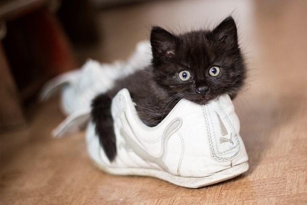 Самые милые котята в мире фото скачать бесплатно - 4bf21