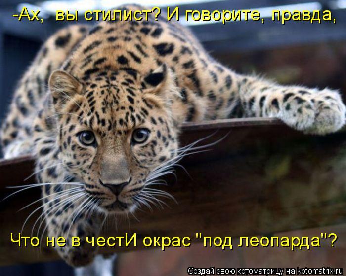 """Котоматрица: -Ах,  вы стилист? И говорите, правда,  Что не в честИ окрас """"под леопарда""""?"""