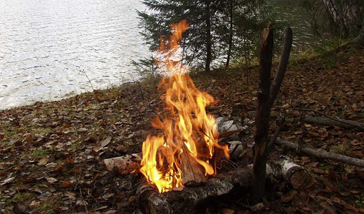 О чём нужно помнить перед походом в лес