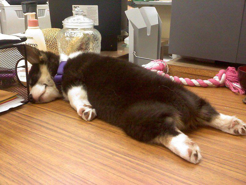Конец рабочей недели, животные тоже устали